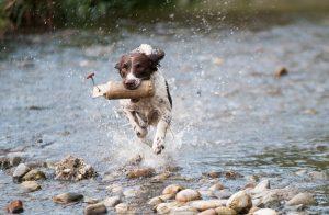 vandpjasken med din hund